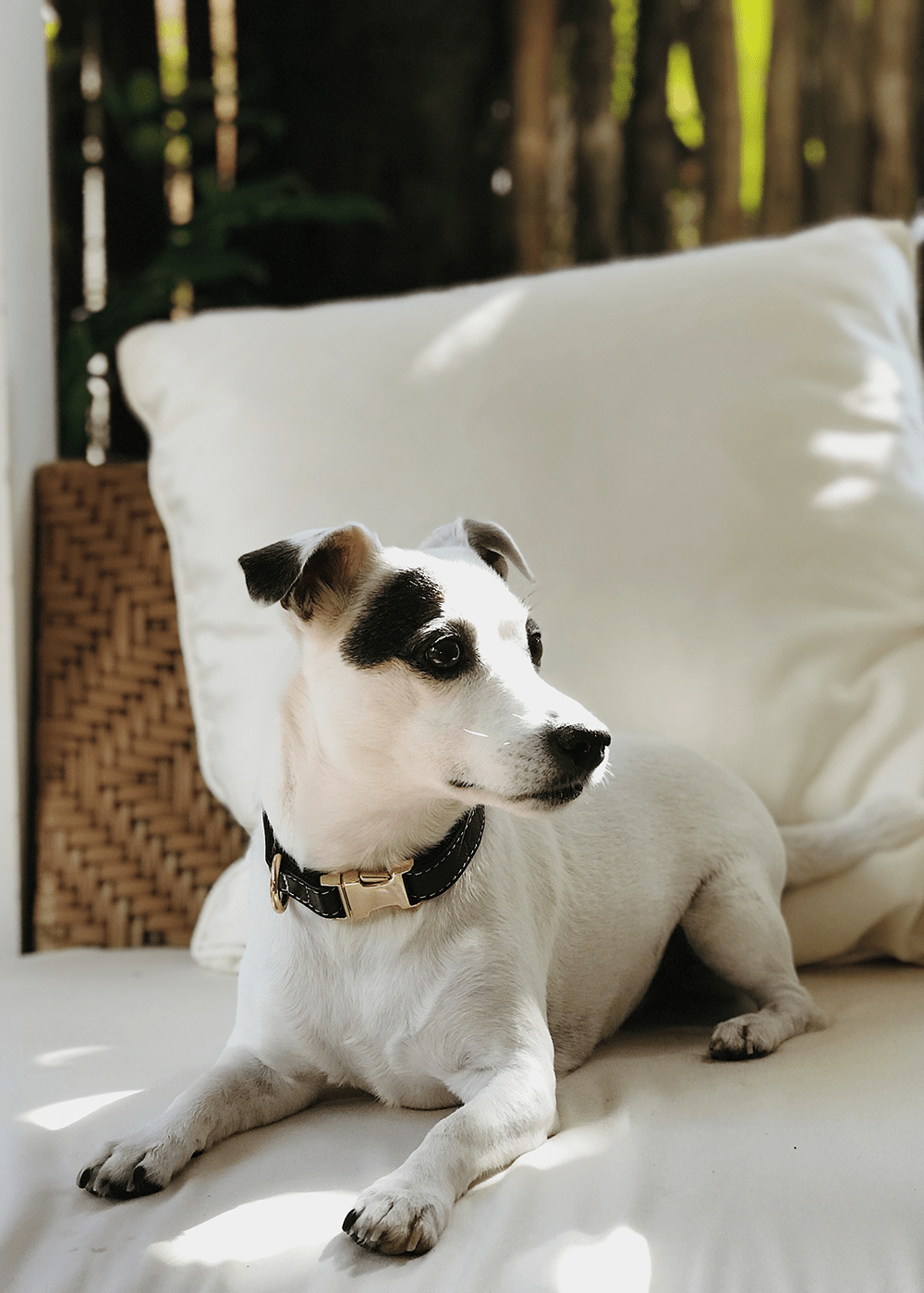 Coleira-para-cachorro-preta-e-dourada--SNOZZE-Design
